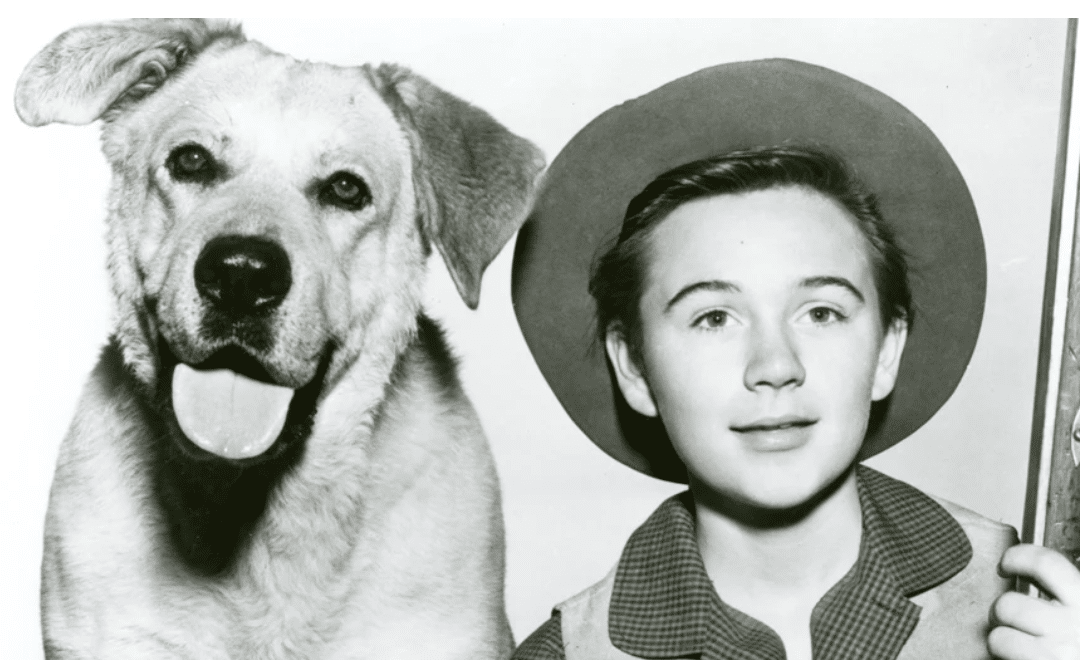Tommy Kirk, Star of Disney's 'Old Yeller' and 'The Shaggy Dog,' Dies at 79